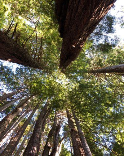 redwood blog slider